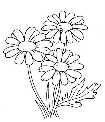 Daisies Flowers Coloring Pages