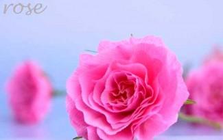 como-fazer-flor-rosa-de-papel-crepom-decoracao-casamento-aniversario-batizado-(12)
